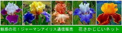 hanasakajijii_net_barnner01_s.jpg